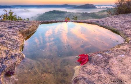 Red Leaf Sunrise