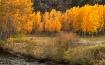 Buffalo Creek, Co...