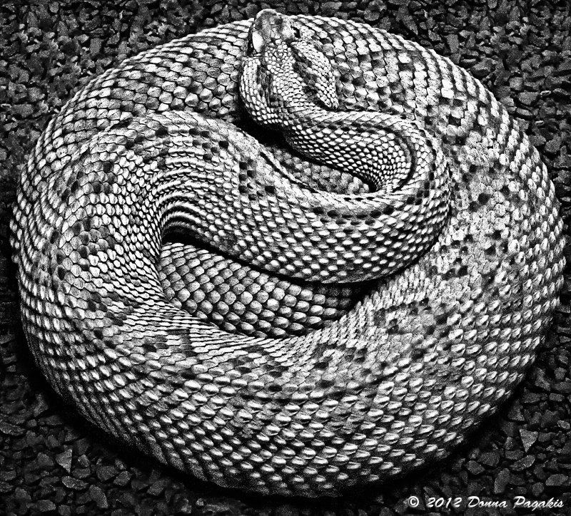 Snake Coiled Tight