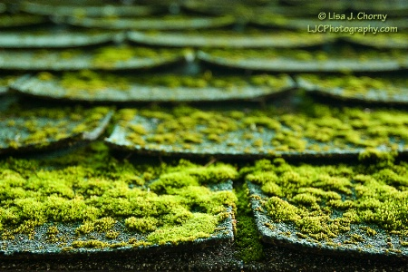 Mossy Roof Tiles