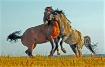 Wild  Horse  Jous...