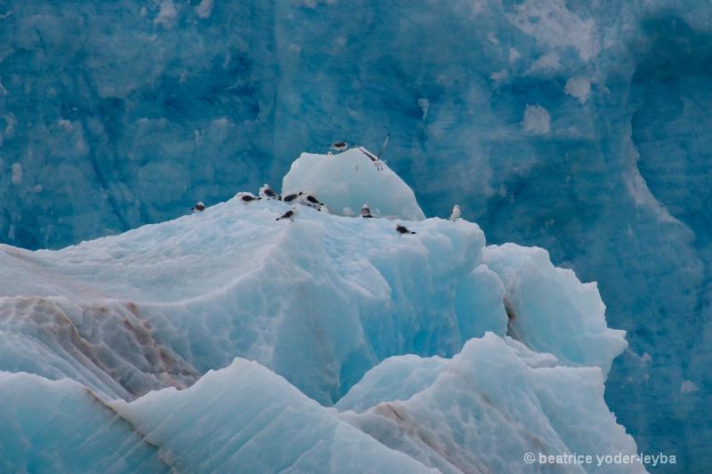 2011 arctic trip - 030 - ID: 13408862 © Beatrice Yoder-Leyba