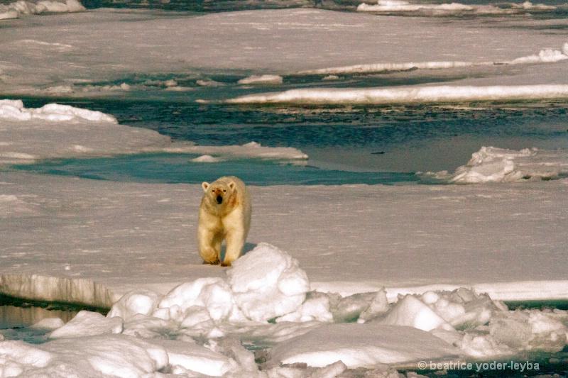 2011 arctic trip - 060 - ID: 13408908 © Beatrice Yoder-Leyba
