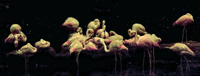 Flamingos' Forms