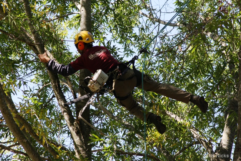 Tree Surgeon - ID: 13414719 © William L. Nicks