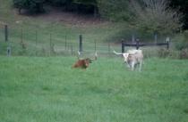 Longhorne Brothers