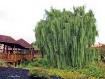 A Hairy Tree