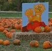 """"""" Pumpkin Fes..."""