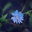 Blue Diamond in t...