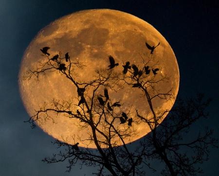 Murderous Moon