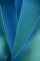 Green/Blue Vertical