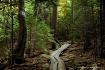 Mystical Walk