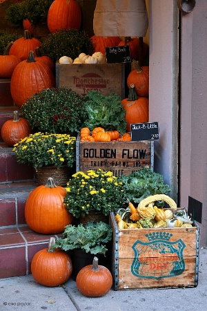 October Flower Shop