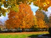 Beautiful Fall Co...