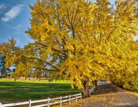 boettcher park - fall 9452