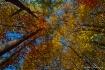 Autumn Mosaic