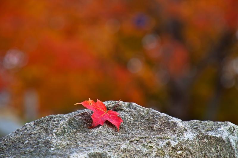 Reminiscing Autumn  - ID: 13466790 © Jeff Robinson