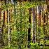 Autumn Trees - ID: 13467855 © Kathleen Roughan