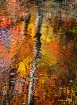 October Autumn Po...