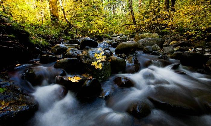 Fall on the Creek