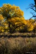 New Mexico Fall C...