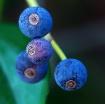 ~Fall Berries~
