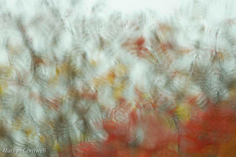 Sumac Serenade - ID: 13476147 © Marilyn Cornwell