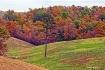 Fall Along Hwy 65