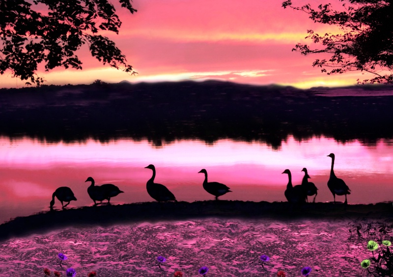 Birds on Sunset Lake