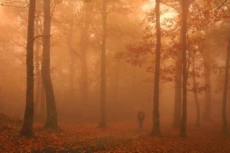 Mystic Walk