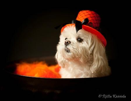 Halloween Spark