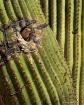 Arizona Snowbird