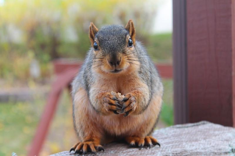 Sandy the Squirrel