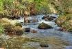 Burbling Stream