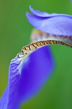 Iris Curves