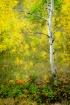 Autumn's Pale...