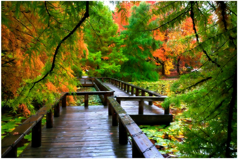 Crooked Bridge - ID: 13487367 © Kelly Pape