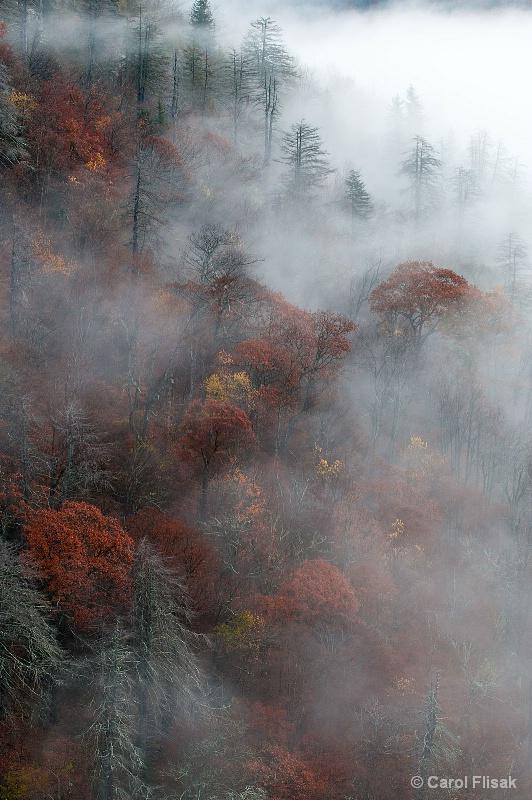 Rolling Fog in North Carolina