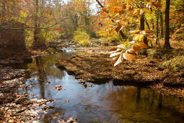 Autumn Leaves over Creek