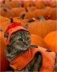 Lola and Pumpkins
