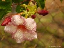 "Flower in the rain. """