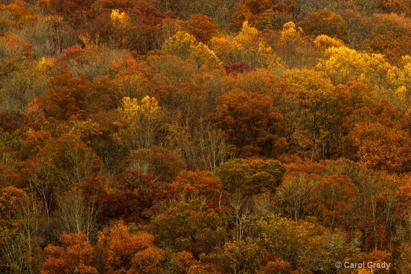 Fall Color a little past peak