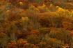 Fall Color a litt...