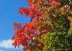 Fall Season in th...