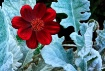 """Red Flower&#..."