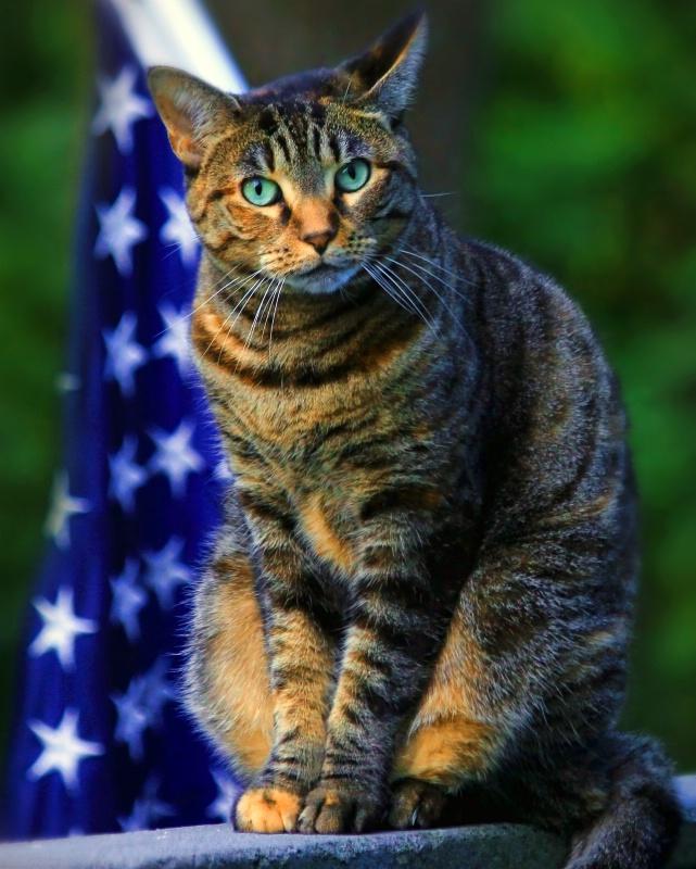 Democat? Republicat? No! American Cat!