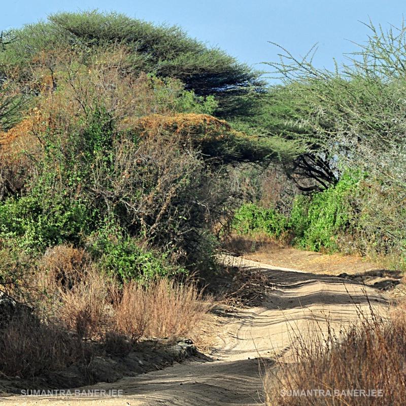 game drive at serengeti  tanzania