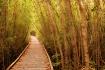 Tranquil Path