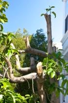 Illegal Pruning