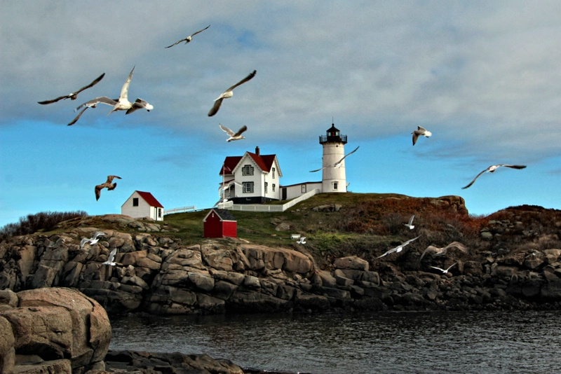Nubble Light and Gulls